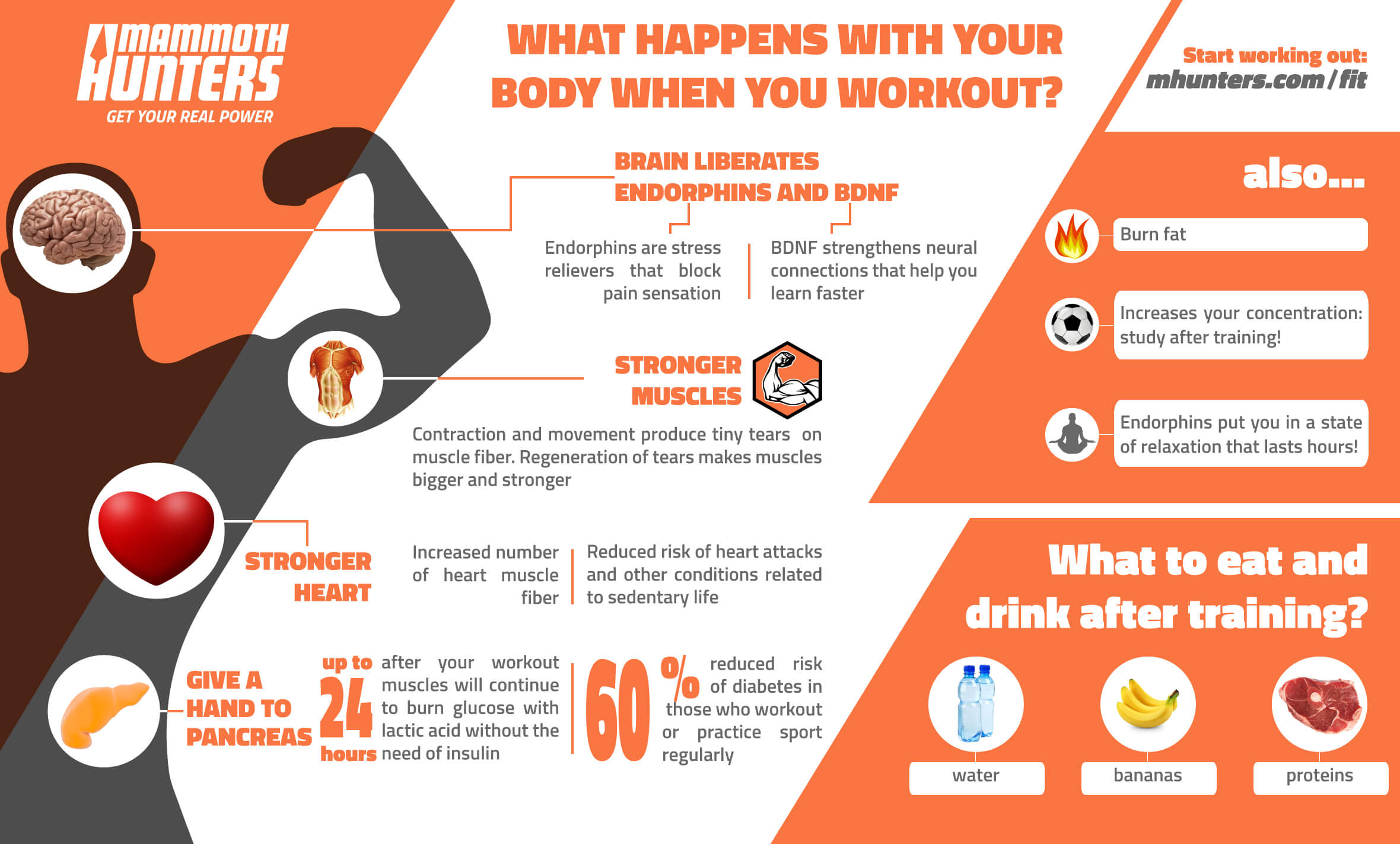 what happens with your body when you workout exercise